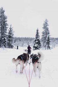 Laponia en Navidad para tu web de viajes